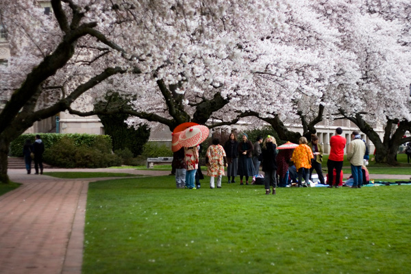 050112_blossoms3