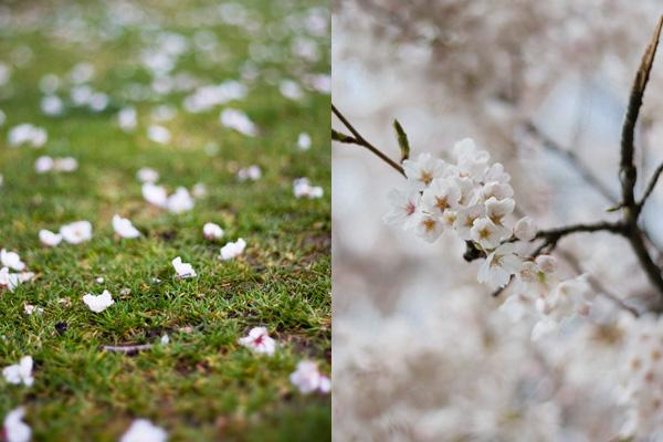 050112_blossoms4