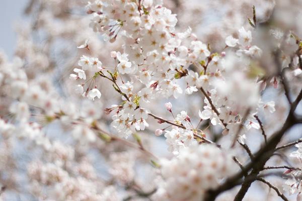 050112_blossoms1