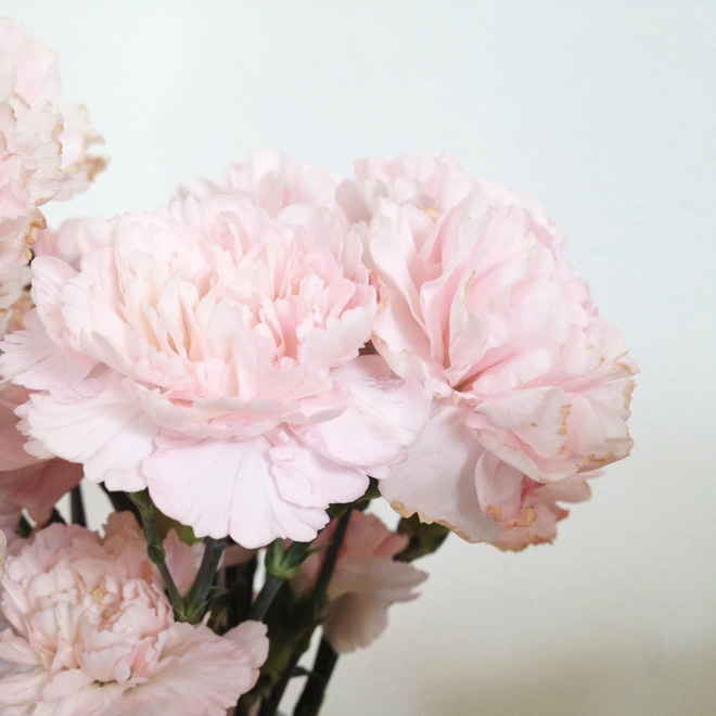 one fine dae: pink carnations