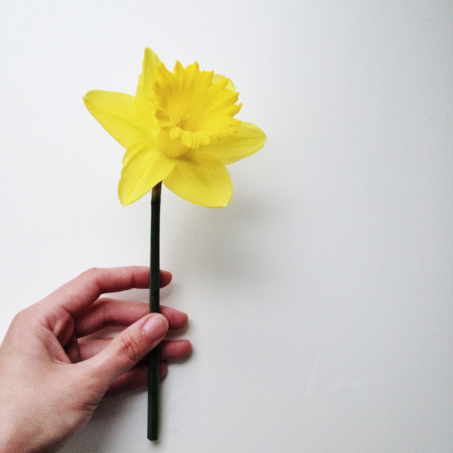 one fine dae: hi spring